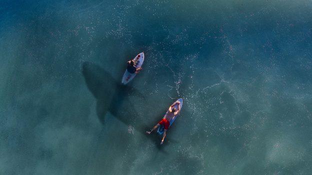 鲨害肆虐的澳洲,要用无人机加上 AI 的组合巡逻海岸