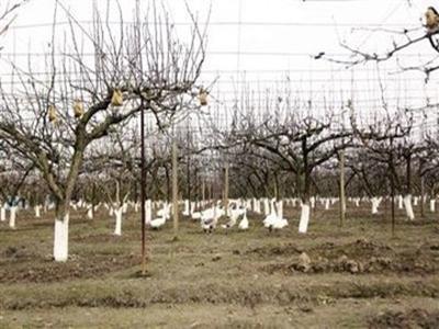机器换人,农业智能机器人将全面商用
